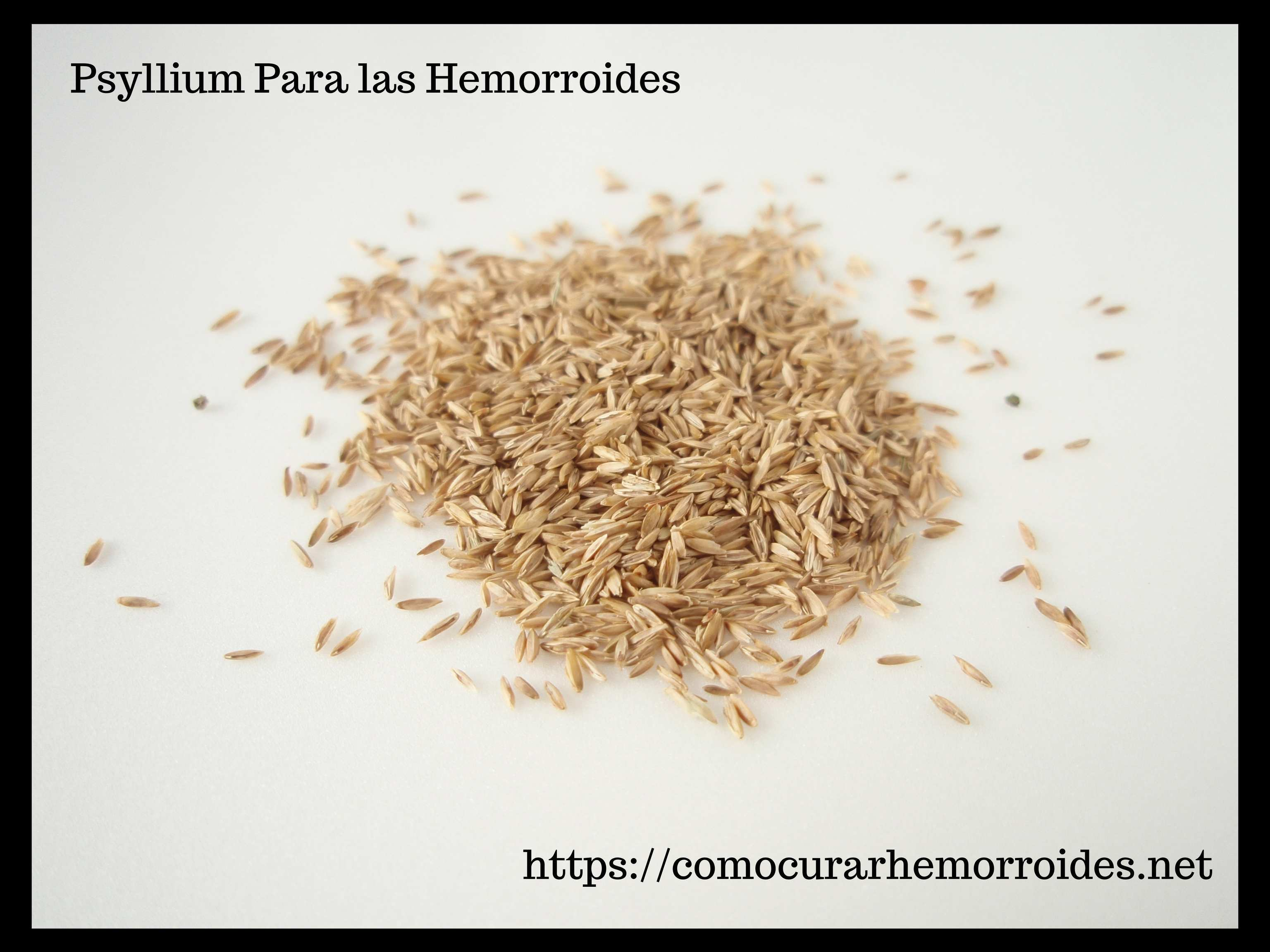 El Psyllium es un remedio natural para las almorranas